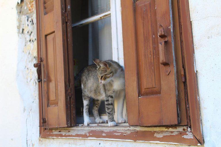04-il-gatto-alla-finestra